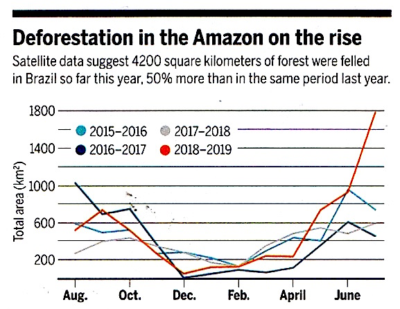 amazon forest burnt