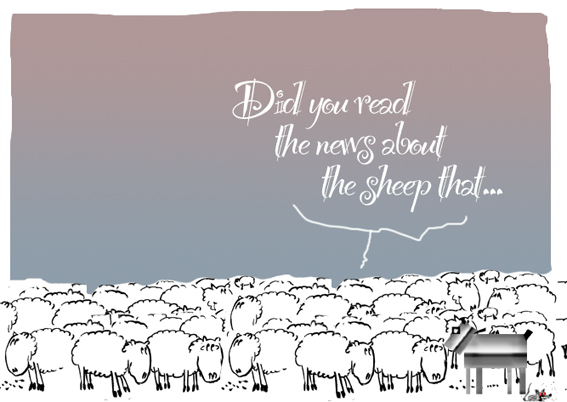 sheep news
