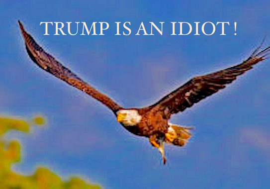 american eagle...