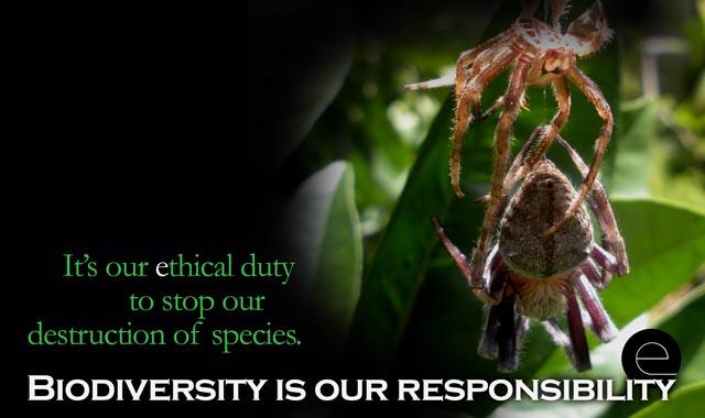 spiderlife...